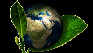 Création d'une éco-entreprise